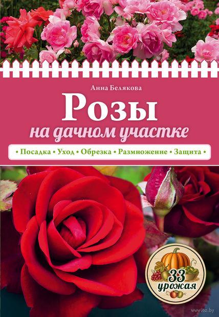 Розы на дачном участке. Анна Белякова