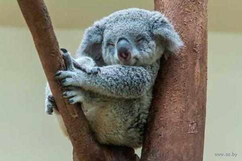 """Объемная аппликация """"Спящая коала"""" — фото, картинка"""