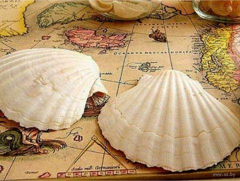 "Алмазная вышивка-мозаика ""Ракушки на карте"" (400х300 мм) — фото, картинка"
